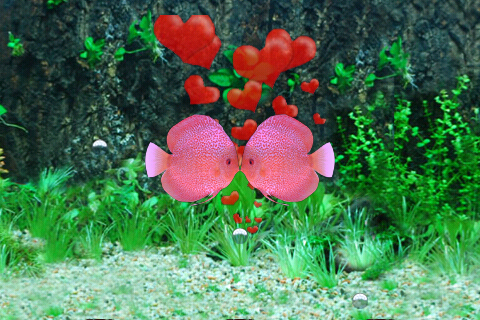 Screenshot A Pair Of Kissing Fish-疯狂亲嘴鱼 免费